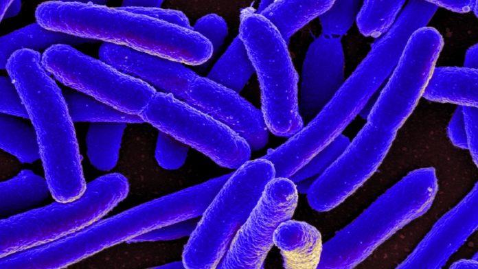 mcr-1 superbug